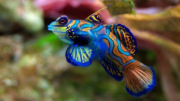 Un pez muy llamativo, The Network by Moraga