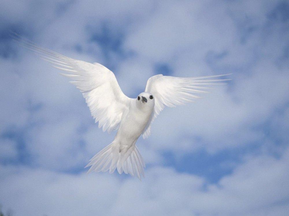 ok_guerra o paz.jpg