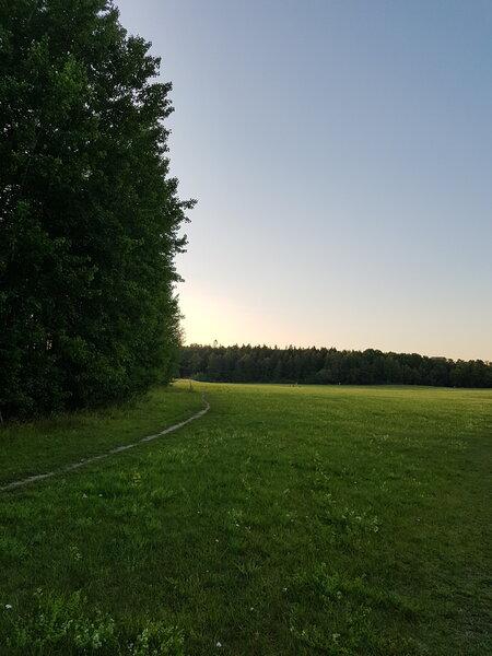 Bosque en Grimsta, Estocolmo
